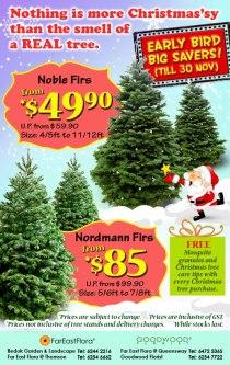 Far East and Goodwood Christmas Tree