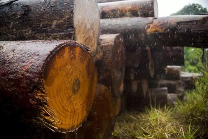 Juína, MT, Brasil: Toras de madeira extraídas ilegalmente da terra indígena Manoki apreendidas pelo IBAMA. (Foto: Marcelo Camargo/Agência Brasil)