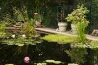 Pool to Pond  converting backyard swimming pools to ponds ...