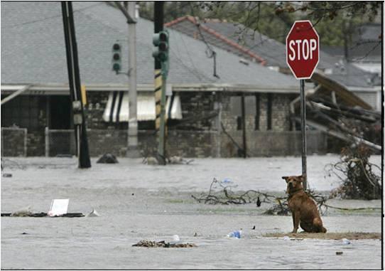 Katrina and Animals