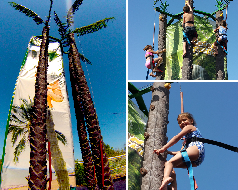 Coconut Tree Climb  EMS Attractrions