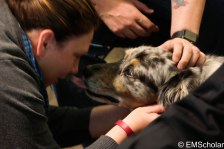 Therapy dogs visit to bring a smile to victims and responders alike (profile in future blog).