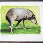 Tapir X