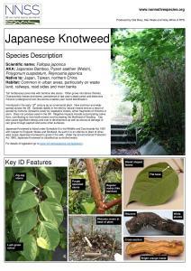 NNSS Identification Sheet: Japanese Knotweed (Fallopia japonica)