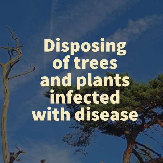 Disposing of trees and plants infected with disease