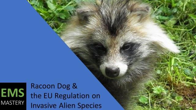 Racoon Dog + the EU Regulation on Invasive Alien Species