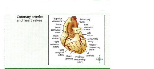 small resolution of heart anatomy