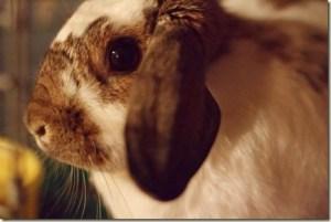 Rabbit: Nature's Cutest Killer