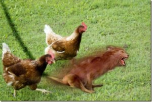 Ass Dragging Werewolf Leads Pack of Chickens