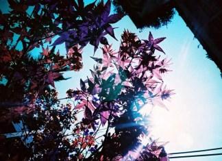 Purple Flare - LomoChrome Purple XR 100-400 (35mm)