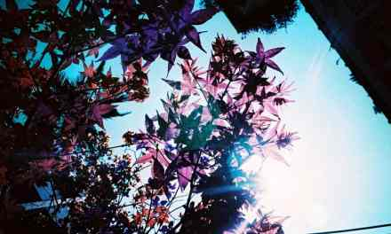 Purple Flare – LomoChrome Purple XR 100-400 (35mm)
