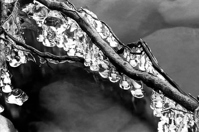 Branch and ice. Pentax MZ5-n Sigma APO-Macro 180mm f3.5 Ilford FP4 Plus — Appennino Tosco Emiliano, Italy.