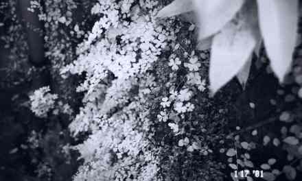 Infra-fern – Shot on Rollei 400 Infrared at EI 25 (35mm format)