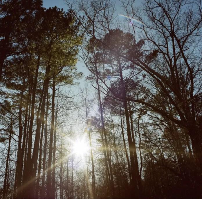 Preston Young - Tree Flare