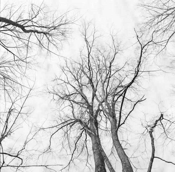 Preston Young - Winter Tree