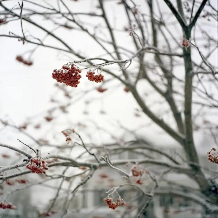 """Frost"", Inglewood Calgary, Alberta - Rolleiflex 3.5F | Kodak Portra 400"