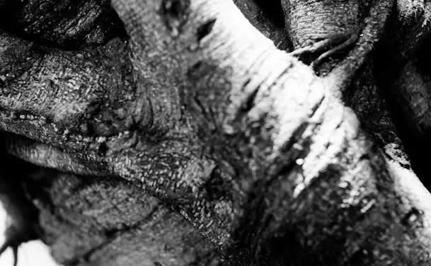 Birch – Shot on Fuji Acros 100 at EI 400 (120 format)