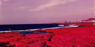 2015-07-28 - Red Algae - Kodak AEROCHROME III 1443 shot at EI 400. Color infrared aerial surveillance film in 120 format shot as 6x6. Shot with #21 orange filter.