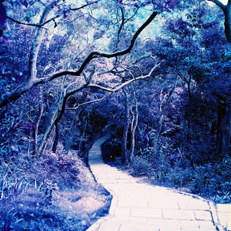 Enchantment - LomoChrome Purple XR 100-400 shot at ISO400