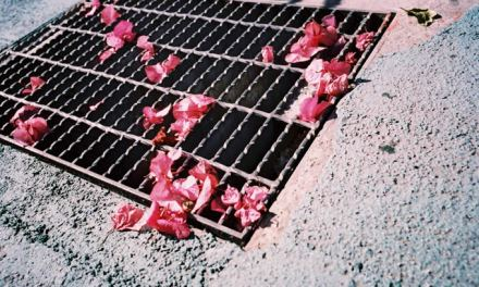 Grate pinks – Shot on Lucky Color Film Super 200 at EI 200 (35mm format)