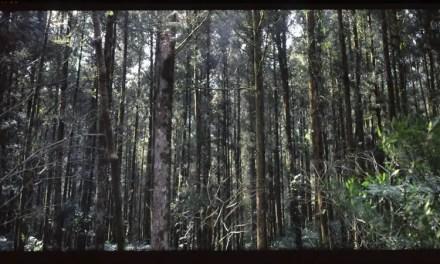 Standing tall – Fuji Provia 100F RDPIII (120)