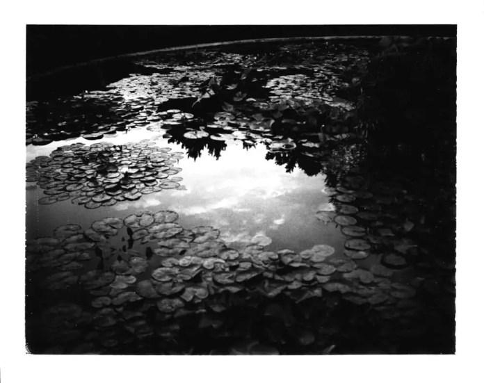 Fuji FP3000B - Polaroid 410 Land Camera