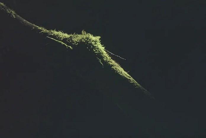 Forest light, Blairadam Forest 2015 - Pentax LX/ Sensia 100