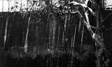 Air roots #02- Shot on Fuji Acros 100 (120)