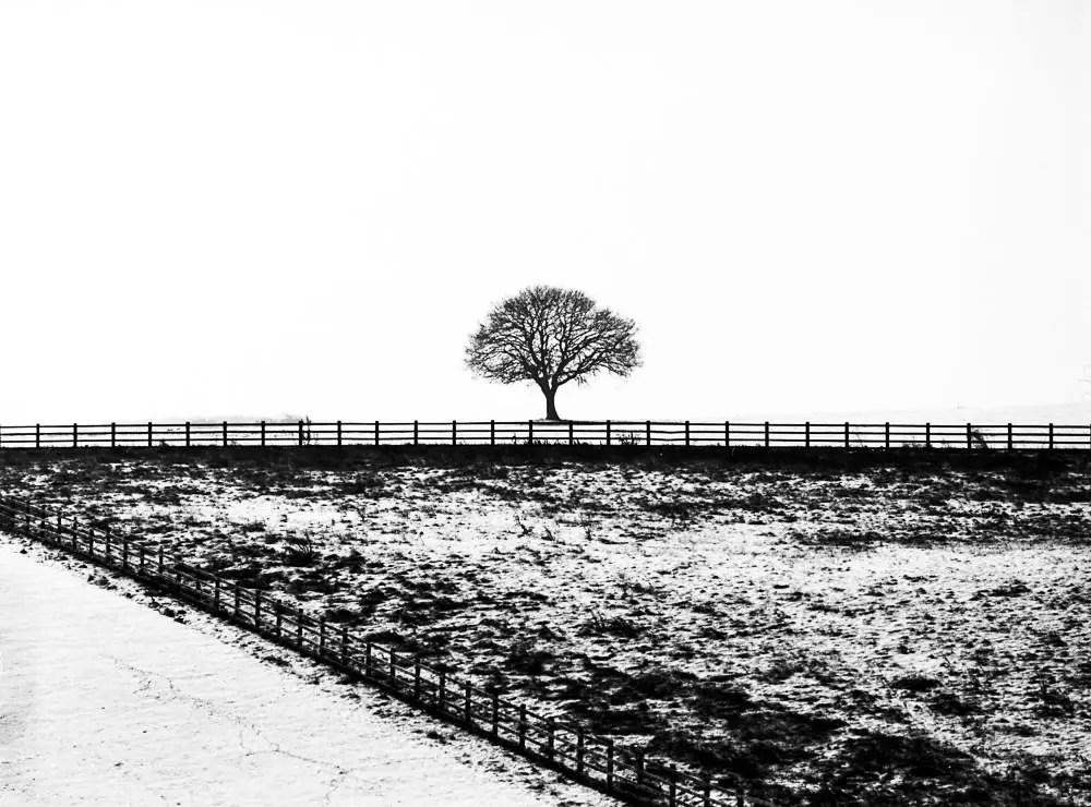 Snow 001