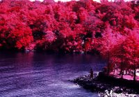 Lush - Kodak Aerochrome III (1443) shot at ISO400. Color infrared slide film in 120 format shot as 6×6. Orange #21 filter