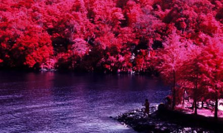 Lush – Shot on Kodak AEROCHROME III 1443 (120)