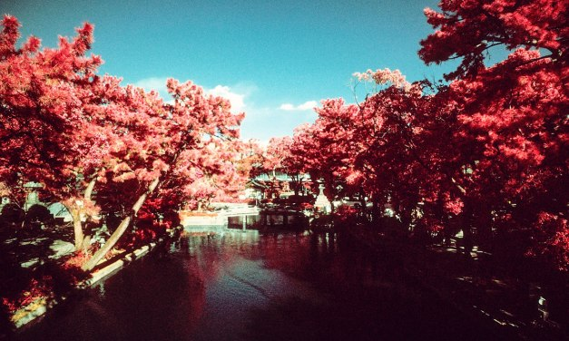 Tranquility – Shot on Kodak AEROCHROME III 1443 (35mm)
