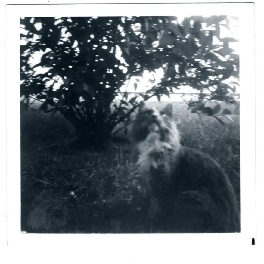 Cat - Kodak Verichrome Pan (1975)