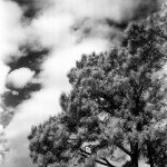 Con-INFRA-erous - Konica Infrared 750 shot at EI 8 with #25 filter. Black and white infrared film in 120 format shot as 6x6.