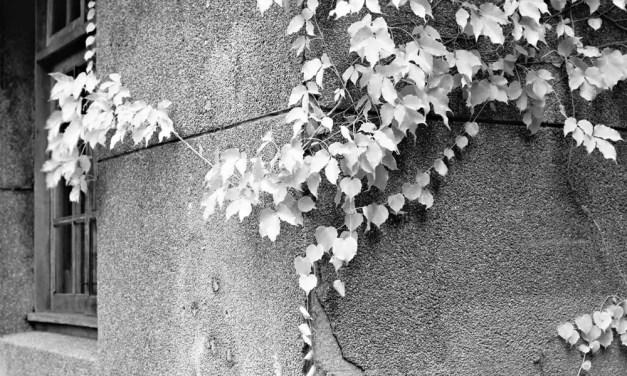 Creep – Shot on Rollei Superpan 200 at EI 3 (120 format)