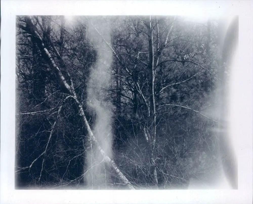 National Arboretum - Polaroid Land 440, Fuji FP-3000B