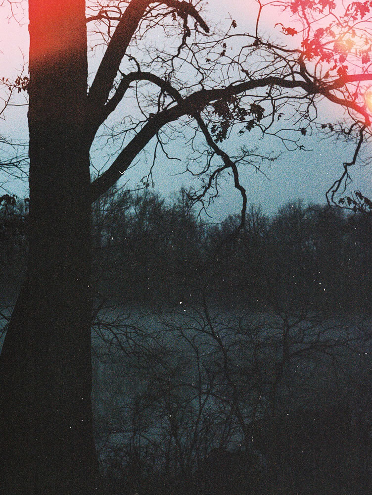 River tree (light leak), Nikon F3, Kodak Portra 400