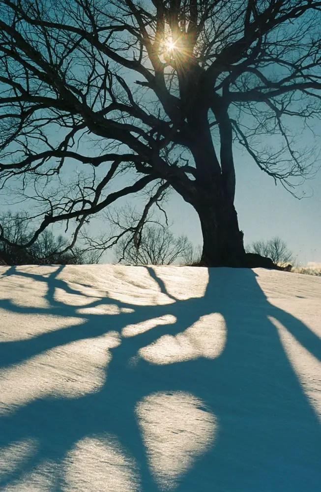 Tree Shadow, Minolta x-700, Kodak Gold 400
