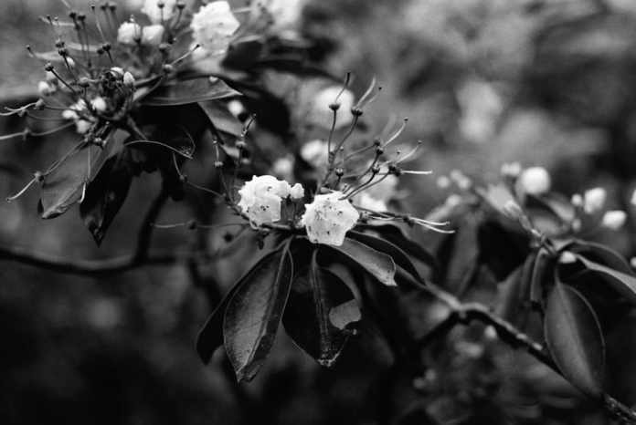 Flowers - Bobby Kulik