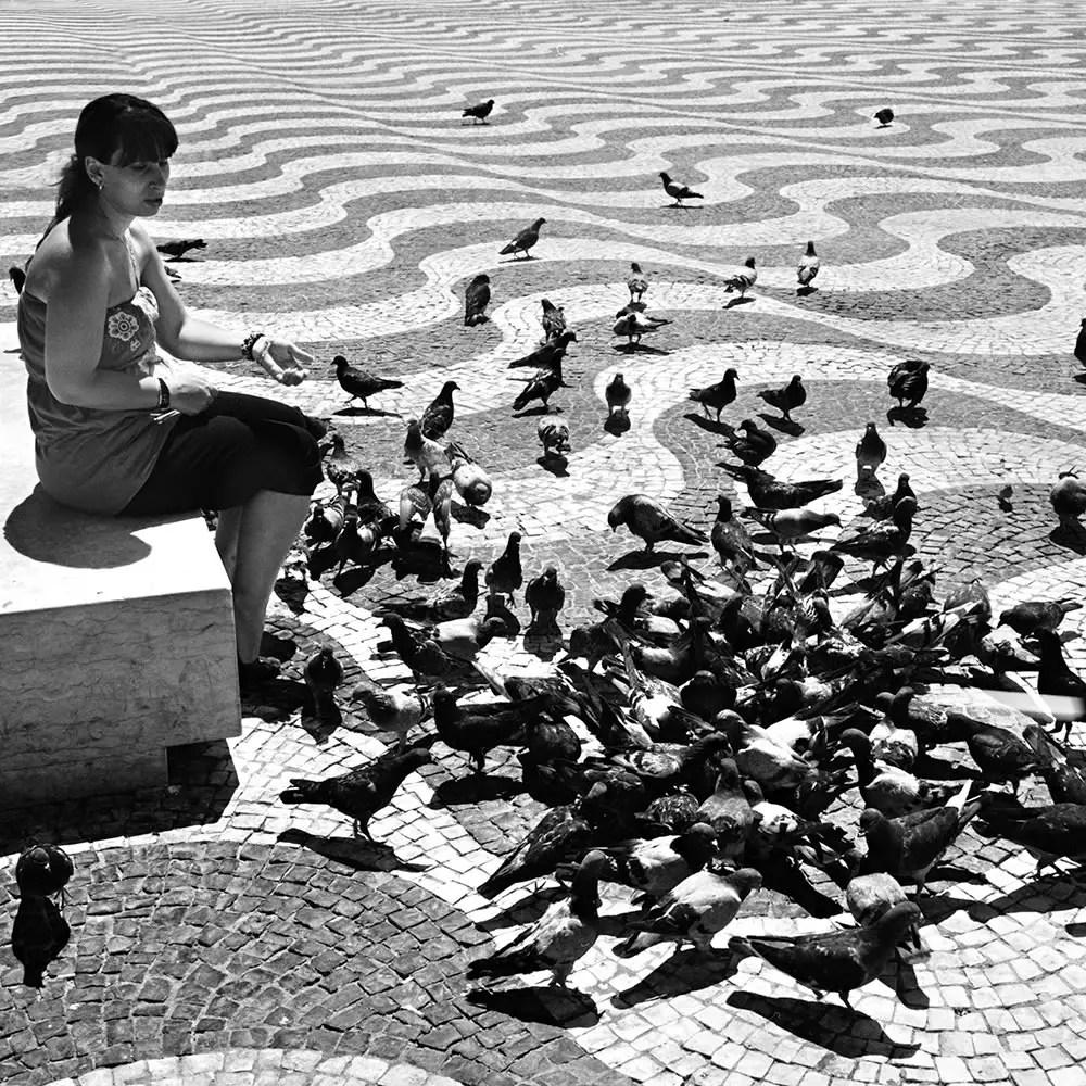 Street Pigeons