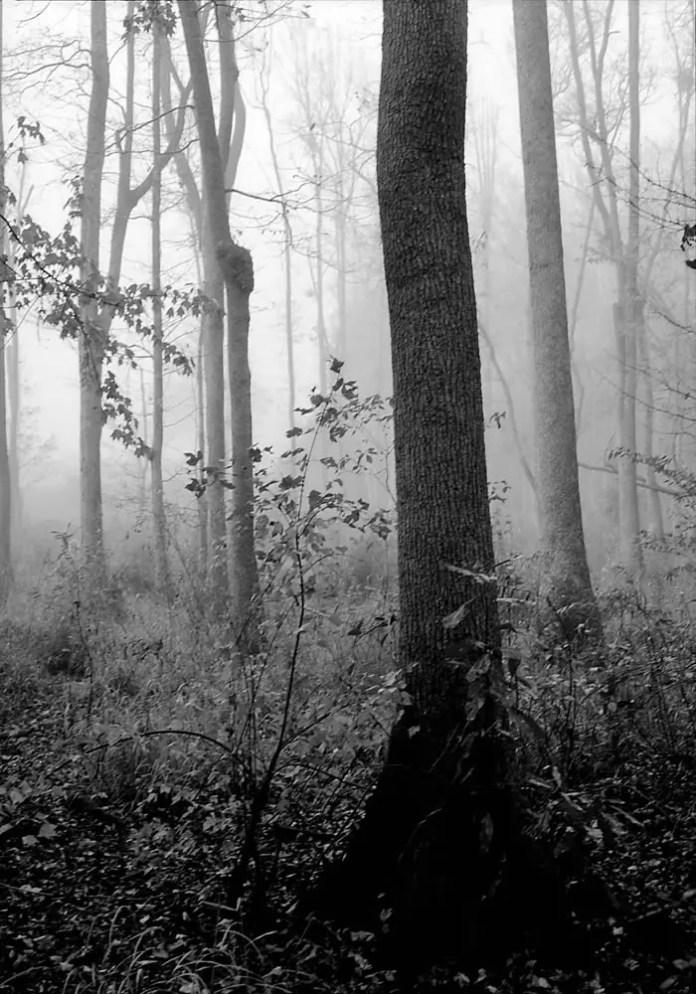 River trail trees after rain - Bobby Kulik