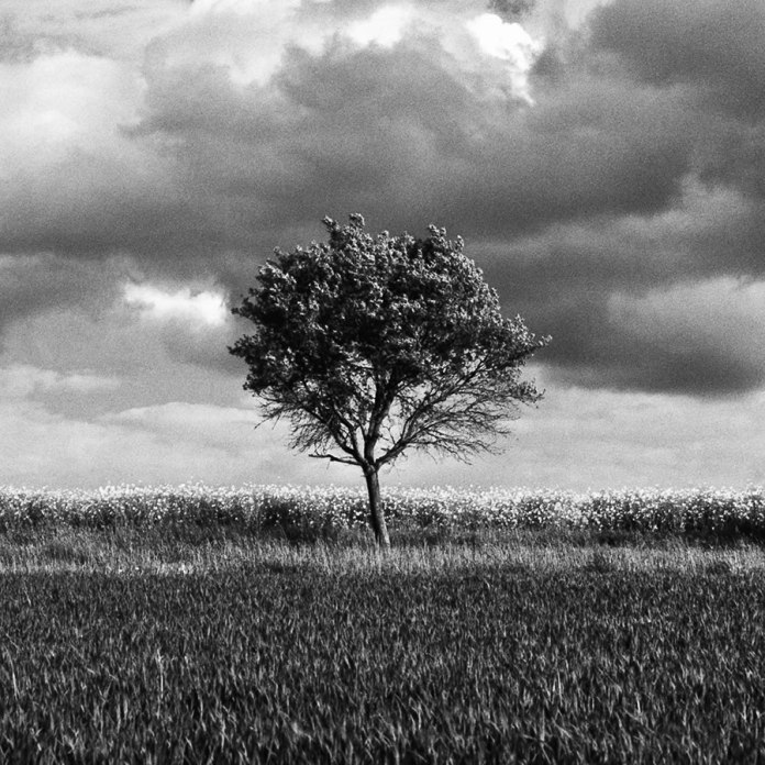 ADOX SILVERMAX - Tree