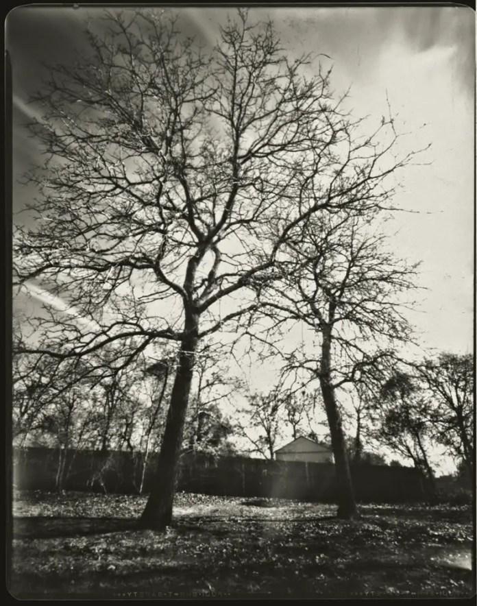 Trees in yard 8x10 pinhole - Bobby Kulik
