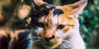 Bokehlicious feline - Fuji Provia 400X (RXP 400) shot at EI 400 Color reversal (slide) film in 120 format 2x Teleconverter, Cross processed