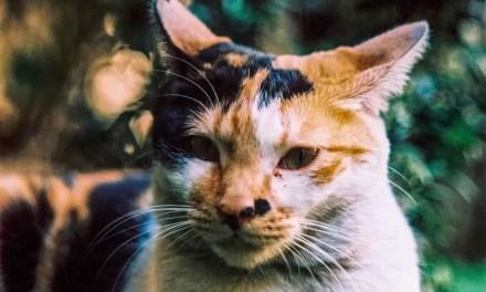 Bokehlicious feline – Fuji Provia 400X – RXPIII (120)
