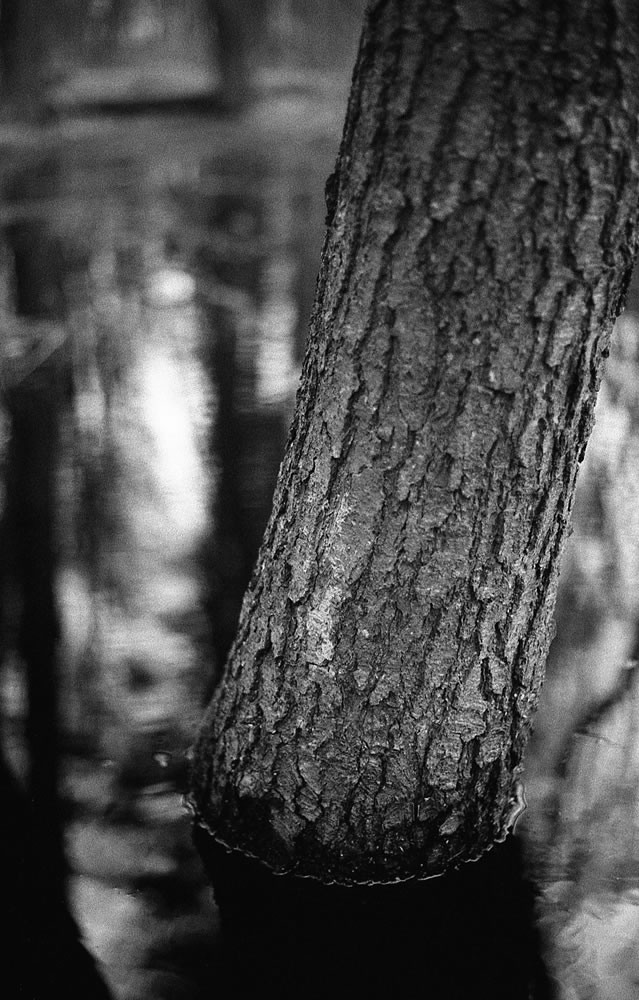 ILFORD HP5 PLUS - EI 3200 - ILFORD DD-X 1+4 - Canon EOS-1