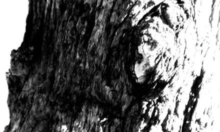Stumped – Polypan F (35mm)