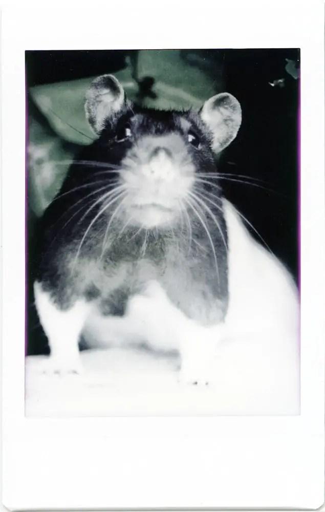 Instax Mini Monochrome - Colour Cast Rat
