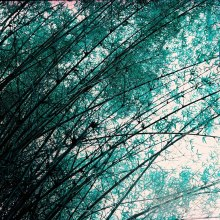 Turquoise butterflies - Lomochrome Turquoise XR 100-400 shot at EI 50. Color negative film in 120 format shot as 6x6.