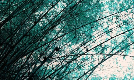 Turquoise butterflies – Lomochrome Turquoise XR 100-400 (120)